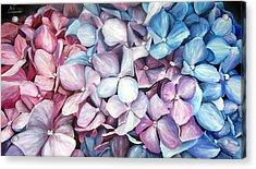 Hortensias Acrylic Print