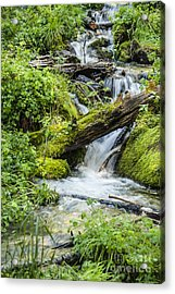 Acrylic Print featuring the photograph Horton Springs by Anthony Citro