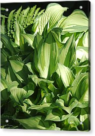 Acrylic Print featuring the photograph Hosta 5416 by Brian Gryphon