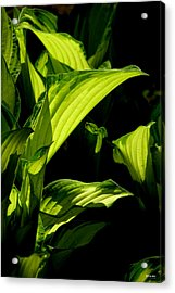 Acrylic Print featuring the photograph Hosta 561 by Brian Gryphon