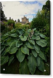 Hosta At Cowdor Castle Acrylic Print