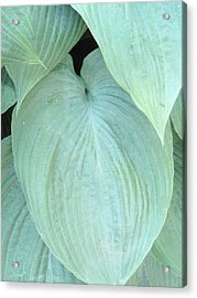 Acrylic Print featuring the photograph Hosta by Beth Akerman