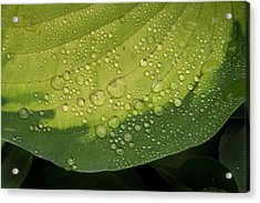 Acrylic Print featuring the photograph Hosta Drops by Jean Noren