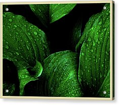 Hostas After The Rain I Acrylic Print