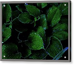 Hostas After The Rain II Acrylic Print