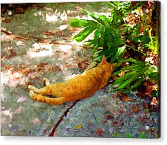 Hot Cat Acrylic Print