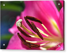 Hot Is Lily Acrylic Print