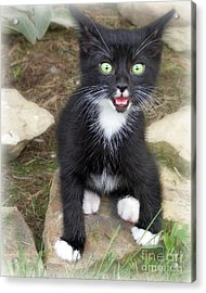 Acrylic Print featuring the photograph Hot Kitty  by Lila Fisher-Wenzel