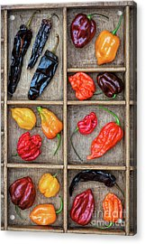 Hot Off The Grid Acrylic Print by Tim Gainey