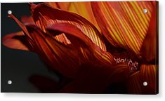 Hot Orange Sunflower Acrylic Print by Nadalyn Larsen