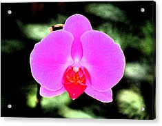 Hot Pink Acrylic Print by Nanette Hert