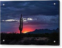 Acrylic Print featuring the photograph Hot Pink Saguaro Sunset  by Saija Lehtonen