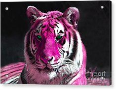 Hot Pink Tiger Acrylic Print