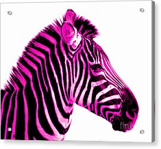 Hot Pink Zebra Acrylic Print