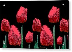 Hot Red Tulips Acrylic Print