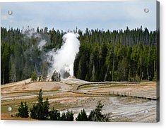 Hot Steam Dog Yellowstone National Park Wy Acrylic Print by Christine Till