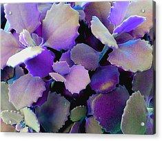 Hothouse Succulents Acrylic Print