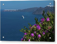 Hottentot Fig On The Rocky Coast Acrylic Print by Andrey Bo