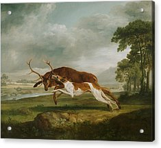 Hound Coursing A Stag Acrylic Print by George Stubbs