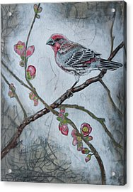 Acrylic Print featuring the mixed media House Finch by Sheri Howe