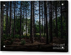House In The Pines Acrylic Print