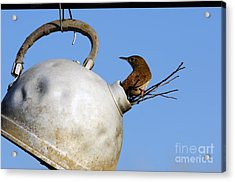 House Wren In New Home Acrylic Print by Thomas R Fletcher