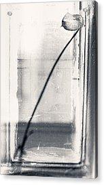 Houseplant #5147 Acrylic Print by Andrey Godyaykin