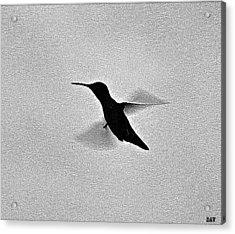 Hover Of The Hummingbird Acrylic Print