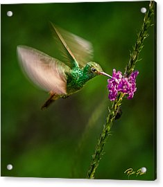Acrylic Print featuring the photograph Hovering In The Vervain  by Rikk Flohr