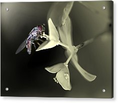 Hoveryfly Acrylic Print by Terry Bridges