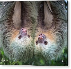 How Cute Is This Acrylic Print by Betsy Knapp