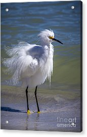 How Do I Look Acrylic Print by Marvin Spates