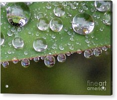 How Many Raindrops Can A Leaf Holds. Acrylic Print