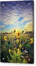 How The Story Goes Acrylic Print by Phil Koch