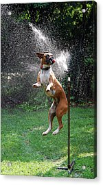 How To Handle A Heat Wave Acrylic Print by Skip Willits