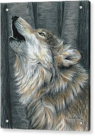Howling Wolf Acrylic Print