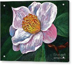 Hoyt Flower Oil 2 Acrylic Print by Emily Michaud