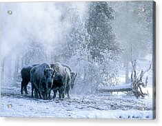 Huddled For Warmth Acrylic Print