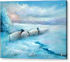 Huddling Sheep Acrylic Print by Sally Seago
