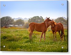 Acrylic Print featuring the photograph Hug It Out by Melinda Ledsome