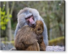 Acrylic Print featuring the photograph Hug Me by Scott Carruthers