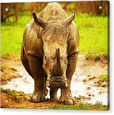 Huge South African Rhino Acrylic Print by Anna Om