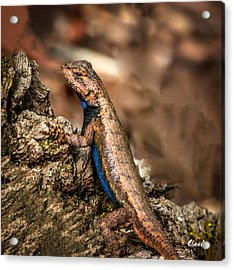 Acrylic Print featuring the photograph Hugo The Lizard by Claudia Abbott