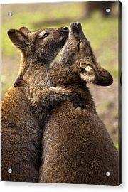 Hugs Acrylic Print by Mike  Dawson