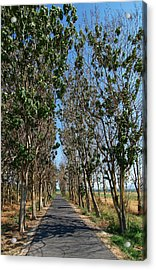 Hula Reserve Country Road Acrylic Print by Arik Baltinester