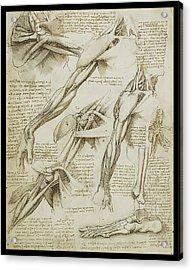 Human Arm Study Acrylic Print
