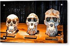 Human Female Male Gorilla Skulls Acrylic Print by Gary Keesler