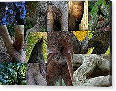 Human Forms In Nature Acrylic Print