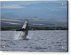 Acrylic Print featuring the photograph Humback Whale by Pamela Walton