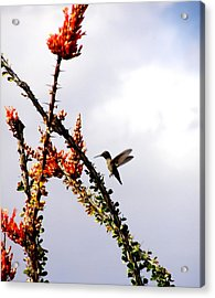 Hummer Likes Red Acrylic Print by Jeanette Oberholtzer